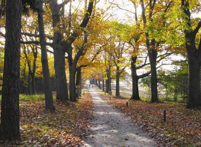 Vakantiepark De Lindenberg - Holten - BungalowSpecials